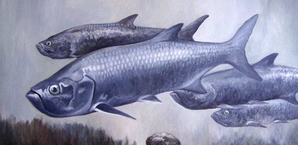 Tarpon Art by John Houle