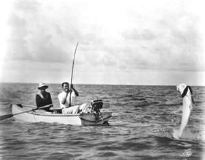Tampa bay Tarpon Fishing.